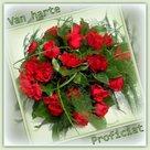 Rode-rozen-Proficiat