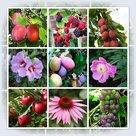 Bloemen en fruit, Bl-19