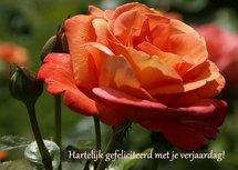 Felicitatie, oranje roos (Ansichtkaart)