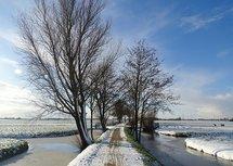 Sneeuwpaadje (Ansichtkaart)