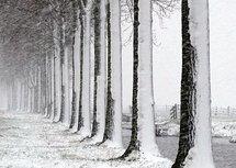 Sneeuwstorm (Ansichtkaart)