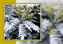 Bloeien in de sneeuw (Ansichtkaart)