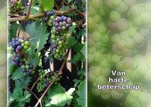 Druiven, beterschap (Ansichtkaart)