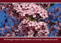 Prunus in bloei (Ansichtkaart)