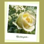 Roos, een lieve groet (ENKEL)