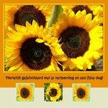 Zonnebloemen (ENKEL)