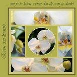 Collage orchideeën (ENKEL)
