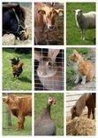 Collage dieren (Ansichtkaart, groot)