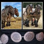 Trekpaarden, collage
