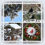 Merels in sneeuw