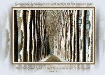 Bomenlaan (Ansichtkaart, groot)