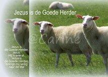 De Goede Herder (Ansichtkaart, groot)