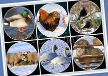 Dieren in de sneeuw (Ansichtkaart)