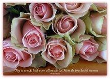 'Hij is een Schild' (Ansichtkaart)