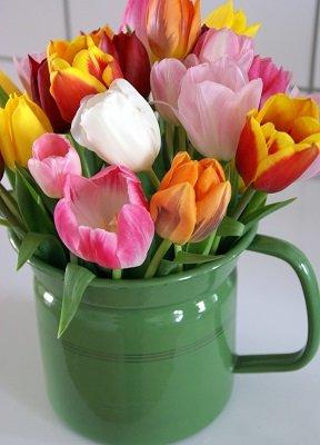 Tulpen in emaille (Ansichtkaart)