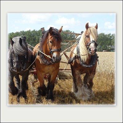 Werkpaarden