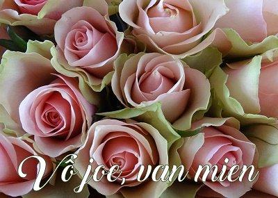 Vô joe, rozen (Ansichtkaart)