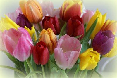 Tulpen (Ansichtkaart, groot)