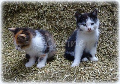 Kittens (Ansichtkaart)