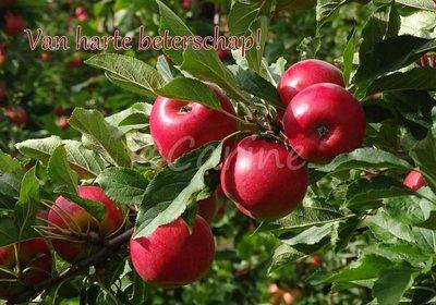 Appels, beterschap (Ansichtkaart)