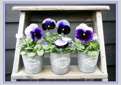 Trap met viooltjes (Ansichtkaart)