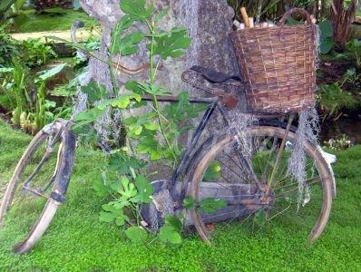 Overwoekerde fiets (Ansichtkaart)