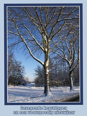Sneeuwtakken (Ansichtkaart, groot)