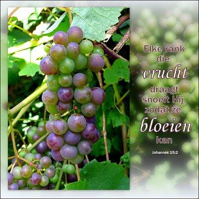 Vruchtdragen