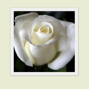 Deelneming, roos
