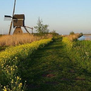 Broeklandse molen