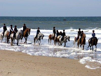 Paarden op het strand (Ansichtkaart)