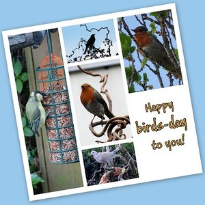 'Birds-day', Fotokaart nr. FE-09