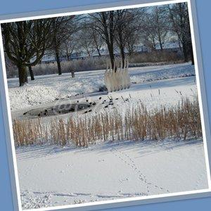 Vijverpark in sneeuw