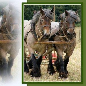 Trekpaarden op het land (ENKEL